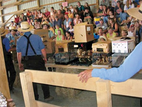 A puppy auction, circa 2014.
