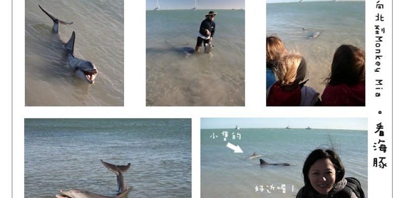 澳洲打工。一路上北Monkey mia 我的腳和海豚游泳~