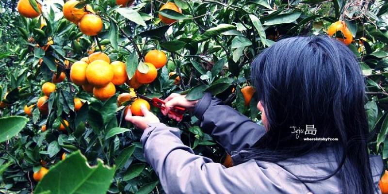 濟州島JeJu。採橘記