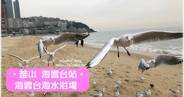 釜山遊記∥ 冬天限定。與海鷗一起在海雲台海水浴場沙灘上玩耍吧!