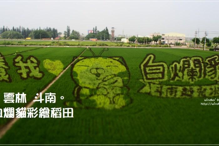 雲林斗南∥ 石龜火車站x白爛貓彩繪稻田x斗南越光米蟲好懂吃市集
