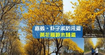 遊記∥ 嘉義太保 朴子溪防汛道黃花風鈴木炸裂大爆開!春季限定的超美麗黃金大道_2021年3月