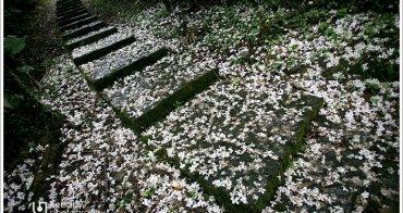 [4Y11M7D+1Y8M] 巧遇桐花.宜蘭仁山植物園(上)