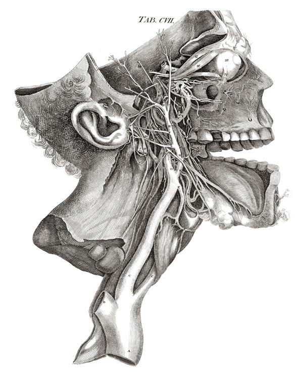 Dissecting a Human Head Through Anatomical Illustrations ...