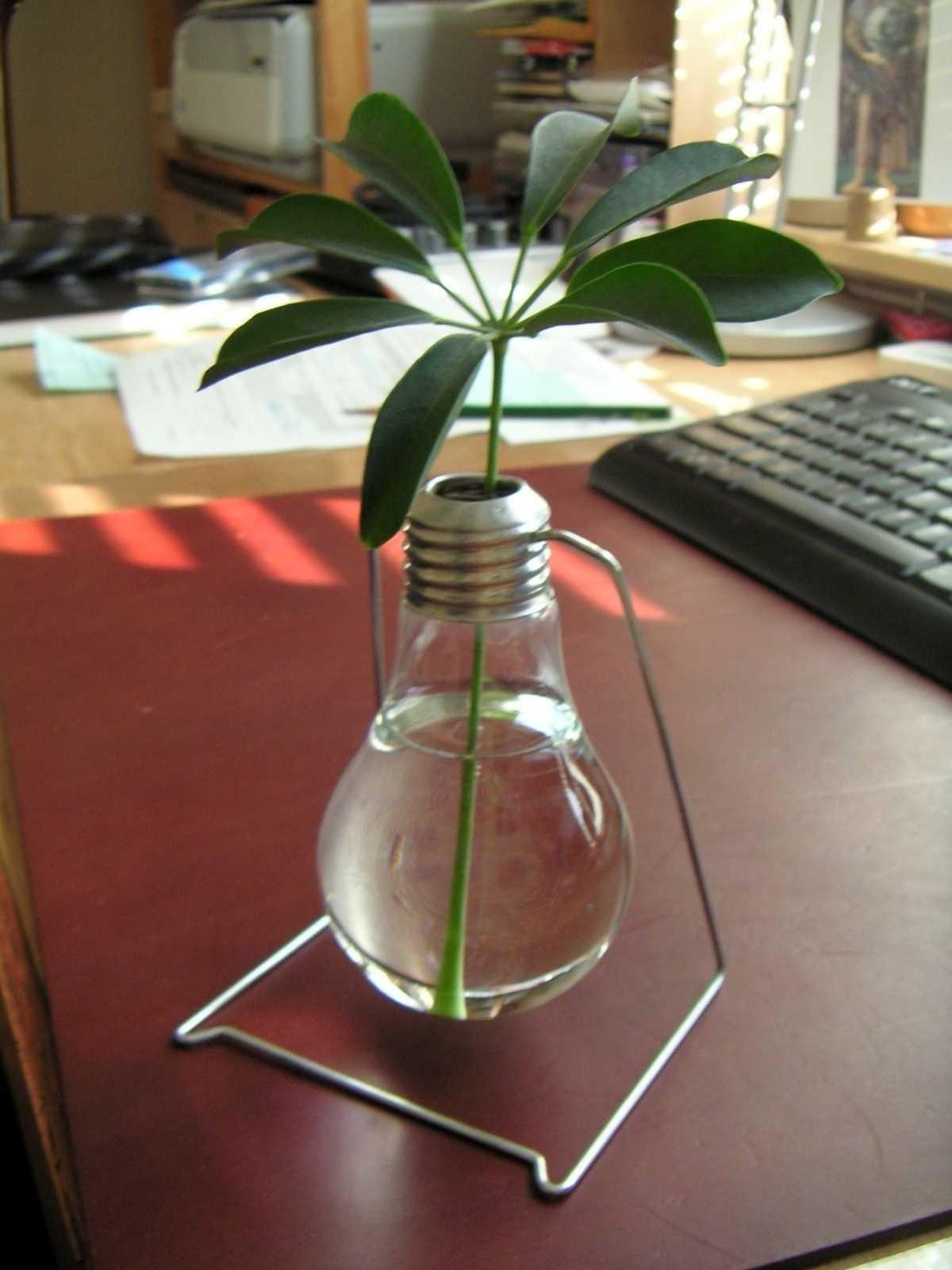 Can You Use Regular Light Bulbs Grow Plants