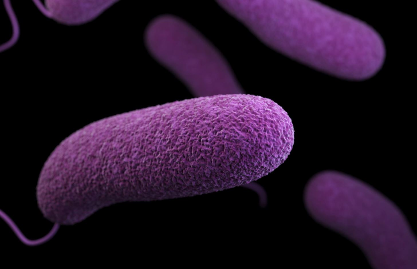 Bacteria Viruses Fungi All The Words You Need To