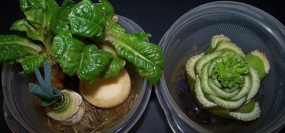10 Vegetables Herbs You Can Eat Once Regrow Forever Food Hacks Wonderhowto