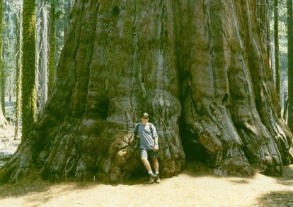 https://i2.wp.com/img.xcitefun.net/users/2010/01/139739,xcitefun-biggest-tree-.jpg?resize=414%2C292