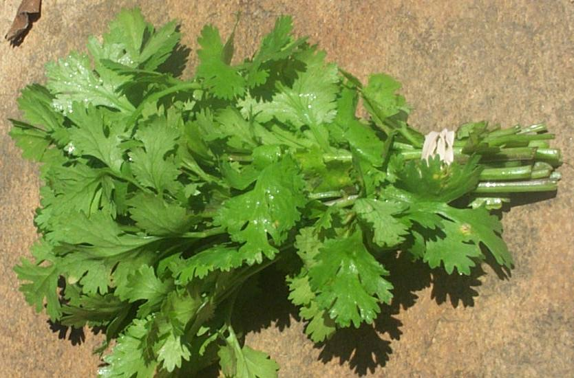 Clean Your Kidney With parsley
