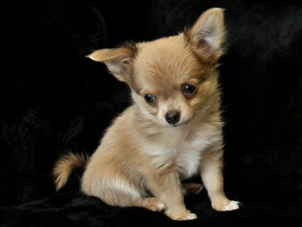 Most Beautiful Small Dogs