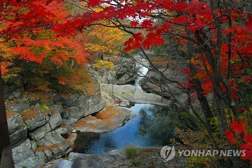 뱀사골 단풍 [연합뉴스 자료사진]