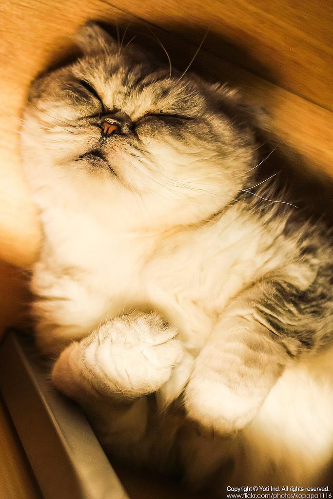 [台北士林] 元氣貓主題咖啡