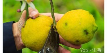 [花蓮瑞穗] 法采有機生態農莊 | 登上舞鶴台地採收有機檸檬, 每顆都跟拳頭一樣大!〈體驗邀約〉