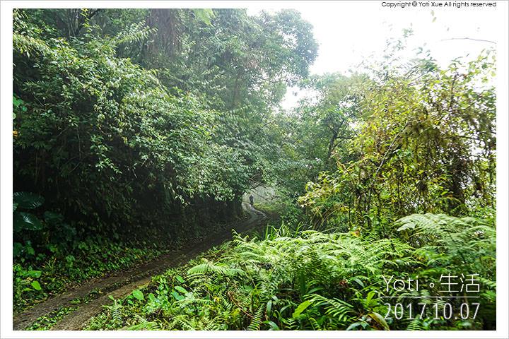 [花蓮太魯閣] 砂卡礑林道 | 往返大禮部落與大同部落的林蔭路徑