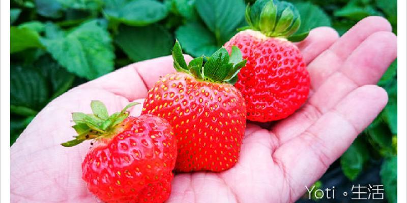 [花蓮鳳林] 開心草莓園 | 站著就可以採草莓囉!
