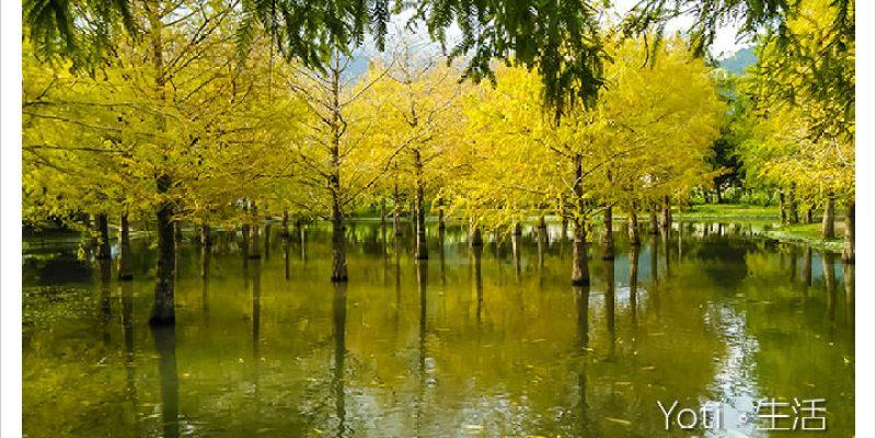 [花蓮壽豐] 鈺展苗圃   人很多的落羽松森林秘境, 怎麼拍都好看!