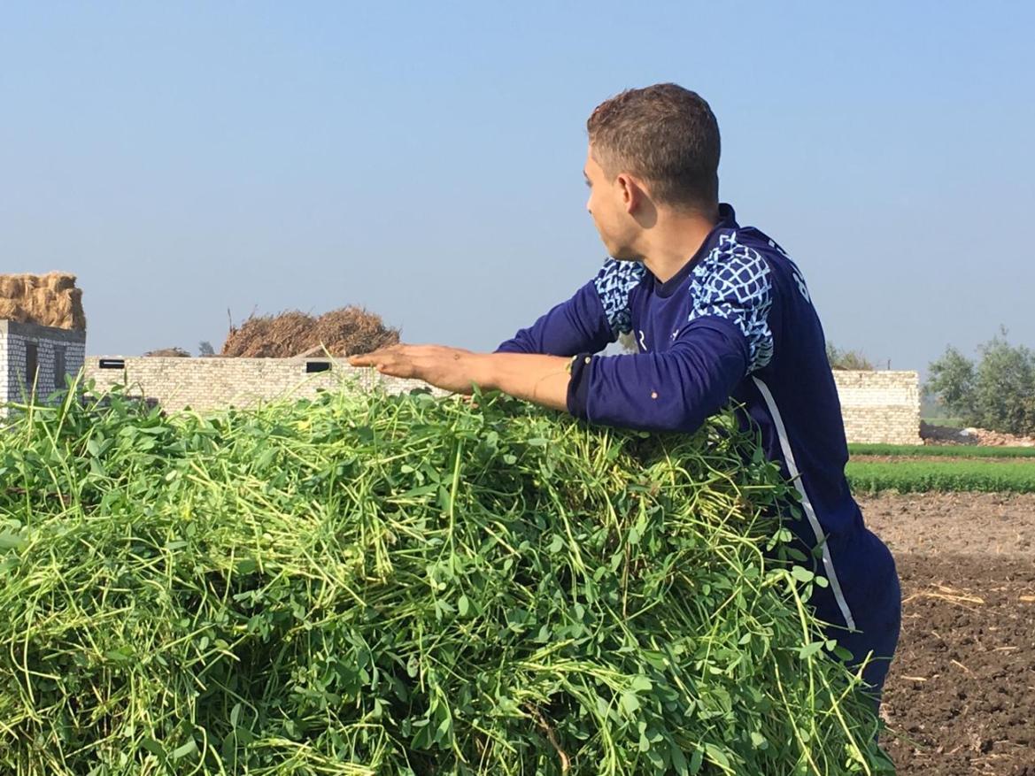 Opiniones de agricultores y agricultores en Ahli partido (3)
