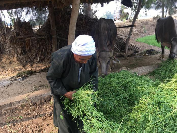 Opiniones de agricultores y agricultores en Ahli partido (10)
