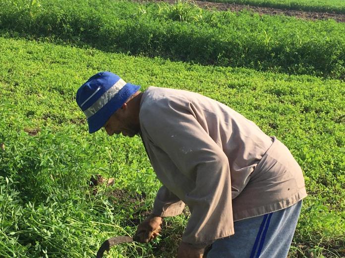 Opiniones de agricultores y agricultores en el juego Ahly (1)