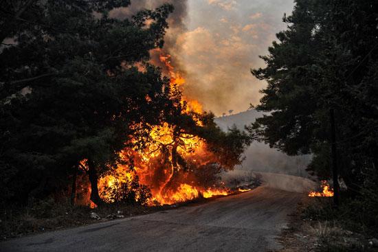 الحرائق تلتهم الاشجار فى سوريا