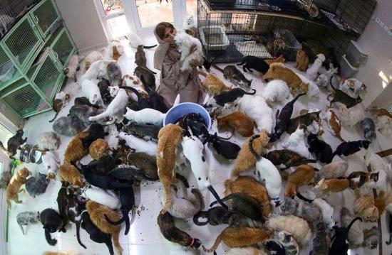 لكن القطط وصل عددها إلى 480 هر