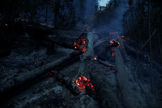 النيران تلتهم جذوع الأشجار