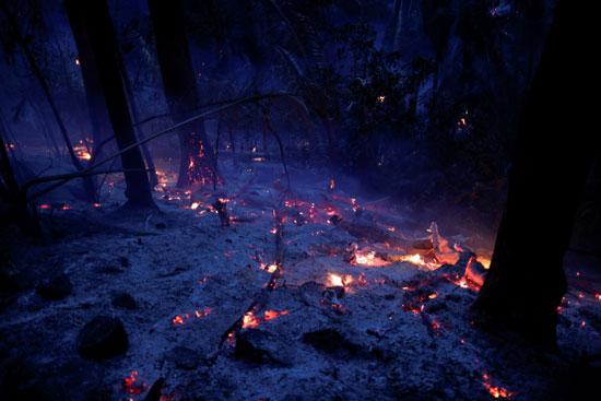 النيرن تلتهم الاشجار
