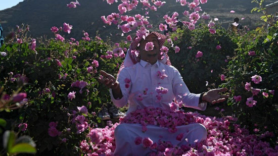 The city of roses in Saudi Arabia turns into a rosy plate that blossoms during Ramadan (7)