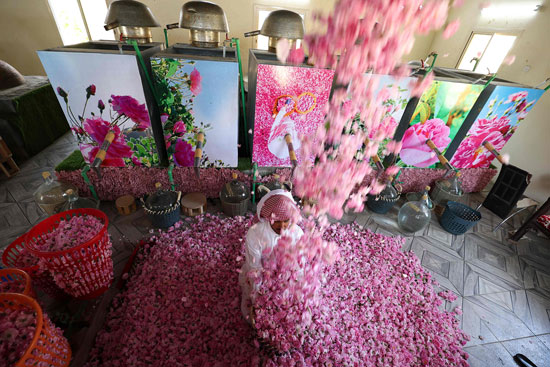 The city of roses in Saudi Arabia turns into a rosy plate that blossoms during Ramadan (1)