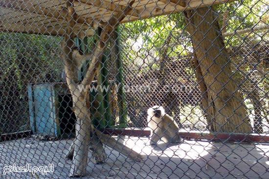 جانب من حديقة الحيوان -اليوم السابع -4 -2015