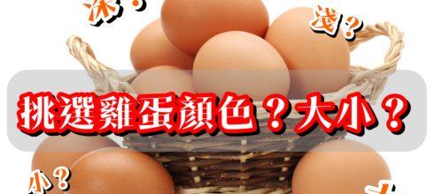 挑選雞蛋顏色要深還淺?要大還小?-台灣養生網