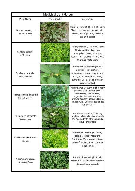 Medicinal Herbs Pdf
