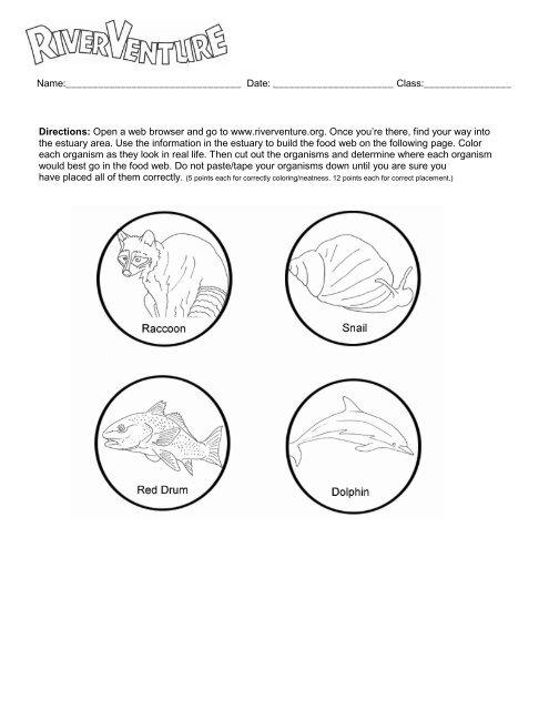 Food Web Worksheet Riverventure
