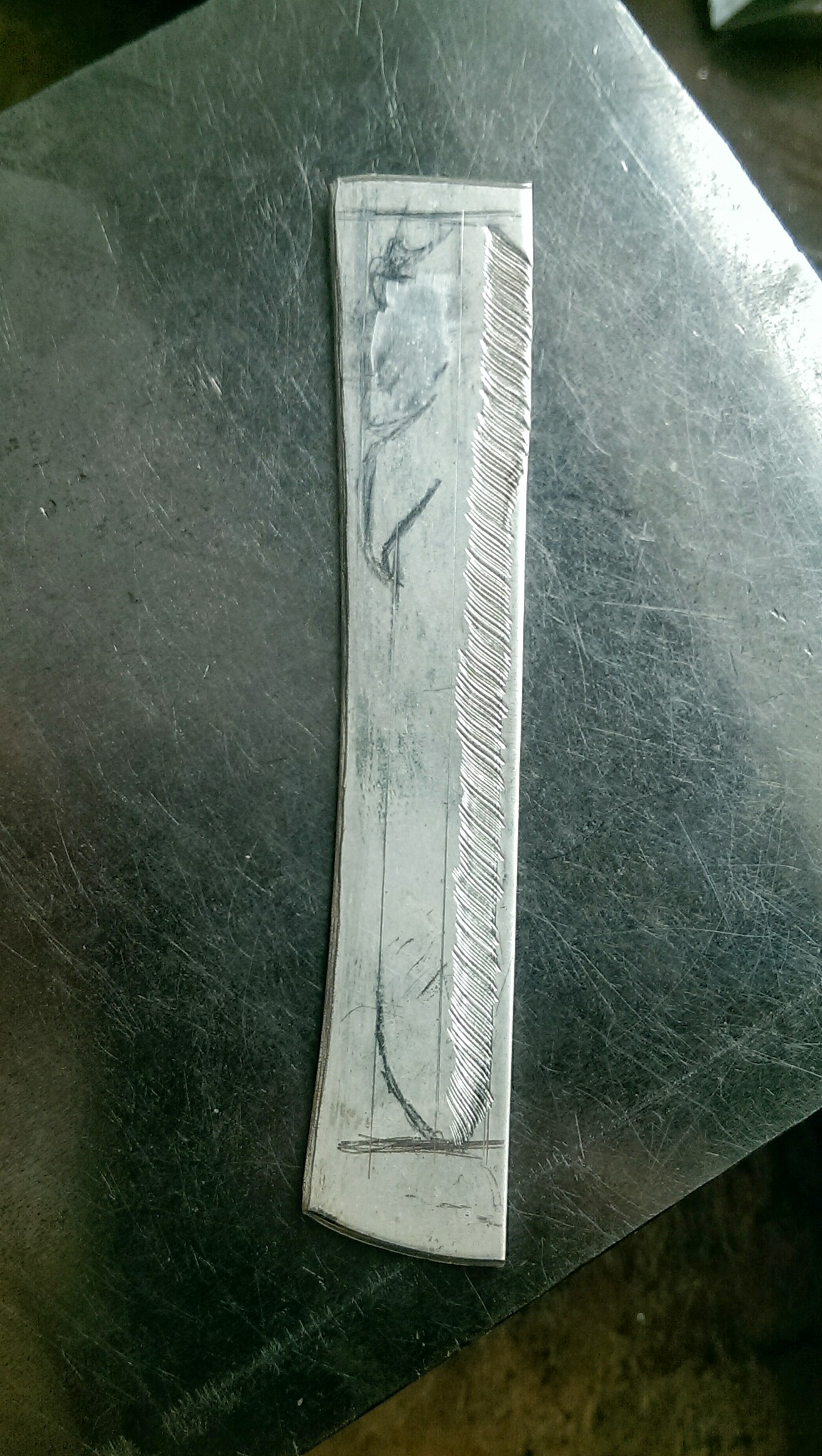 Primary Wing Feather