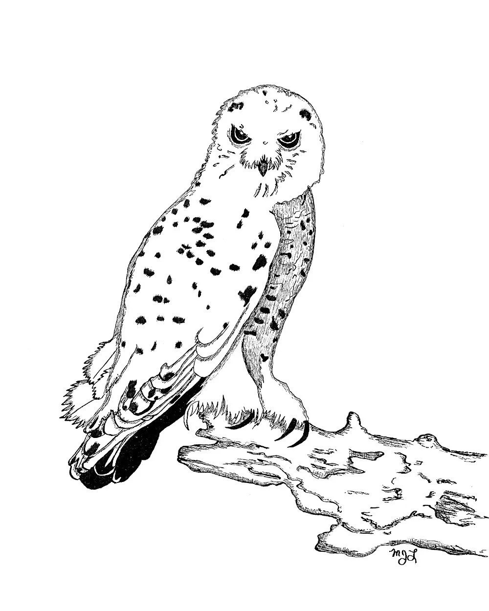 printable snowy owl coloring pages cooloring com