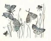 Moths No. 2        large print - amberalexander