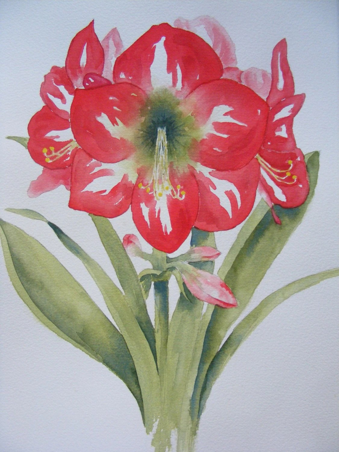 Christmas Amaryllis Reproduction Of Watercolor Painting Red