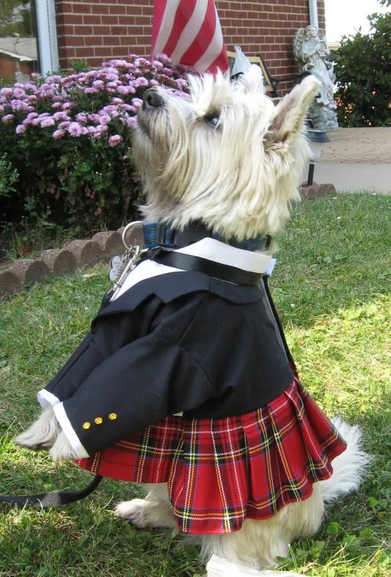http://www.etsy.com/listing/28122001/formal-scottish-kilt-for-dogs