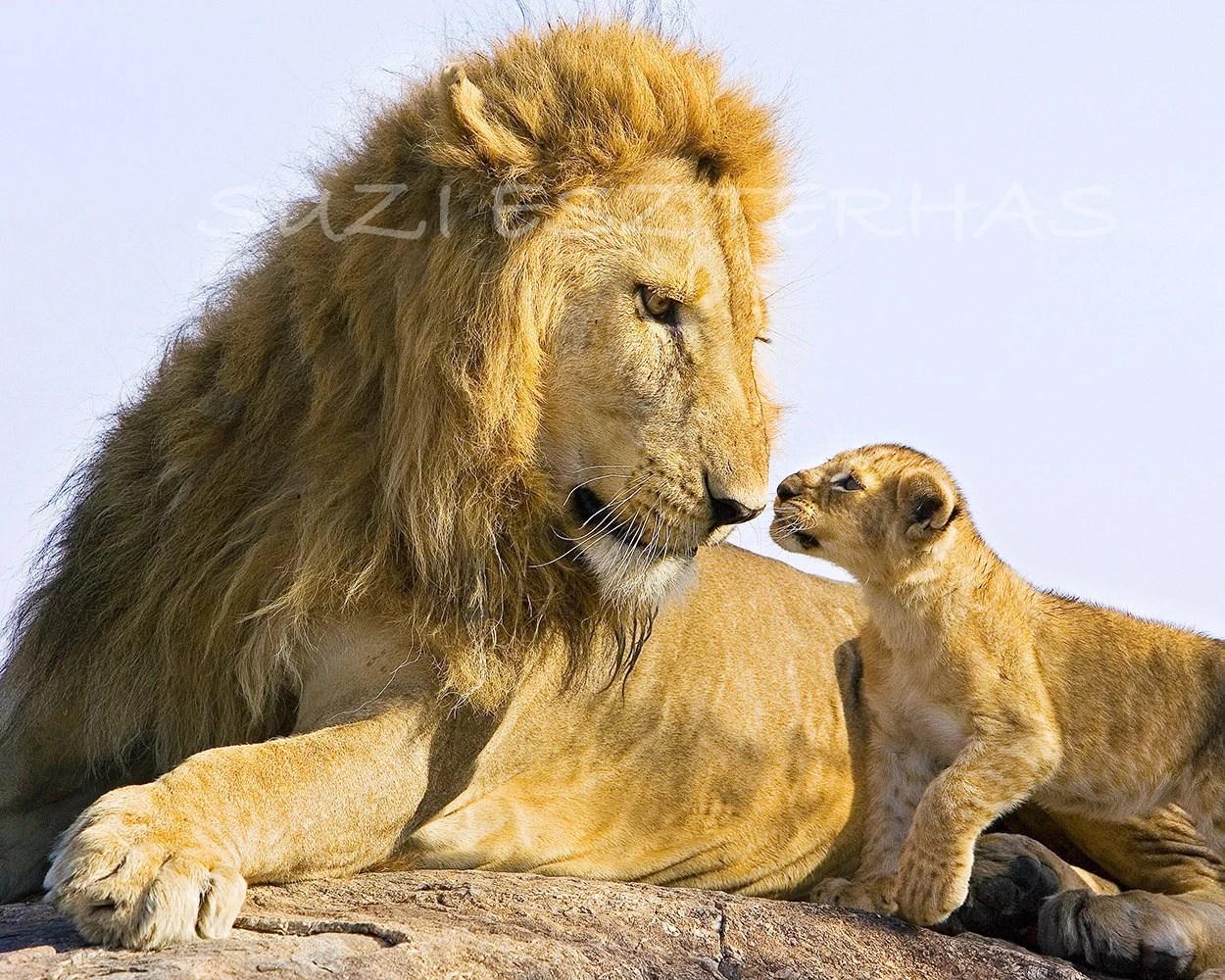 Safari Baby Animal Photography Set Of 4 Photos By