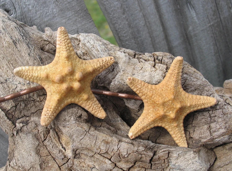 Mermaid Hair Accessories Real Natural Knobby Sea Star Starfish