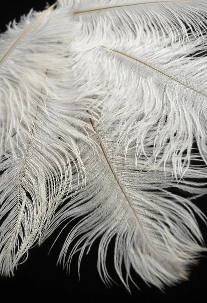 "100 - 20/28"" Ostrich Feathers - BabyBFeathers"
