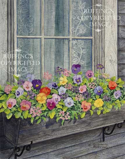 Window Box With Pansies Pansy Floral Giclee Fine Art By