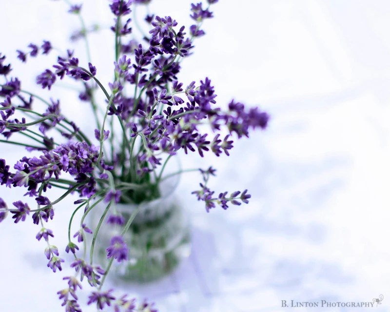 Flower Photography - Lavender Photograph - 8x10 Fine Art Photography Print - Purple White Home Decor - BLintonPhotography