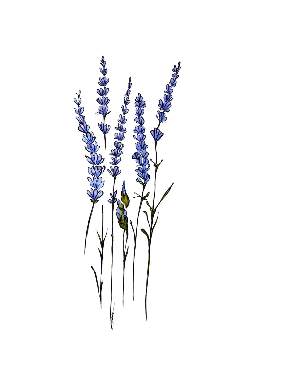 Lavender Greeting Card By Katielisdesign On Etsy
