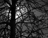 Nature Photography Moonlit Tree Silhouette Black and White Photo Print - DesignByJV