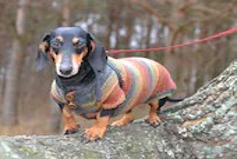 Striped  dog Sweater Clothes Hand Knitting  dachshund medium dog  red brown - Puppy1Love