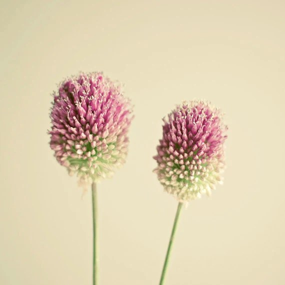 Two of a Kind - Flower photograph, nature art, flower art, pink and green, minimalist art, gift for Mom - LolasRoom