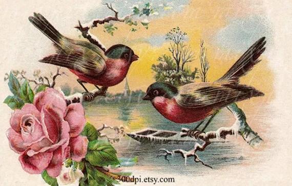 Birds Digital Scan Vintage Postcard Printable Download Thank