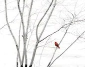 Nature Photography Print, Red Cardinal, Minimalist Home Decor, 8x8 Crimson, White, Dreamy Nature Photo - TheShutterbugEye