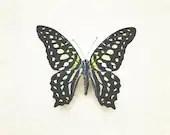 8x10 Photograph, Butterfly Wall Art, Yellow Black Photo, Neutral Nature Photography, Etymology Still Life, Dreamy Nursery Art, Polka Dot - PureNaturePhotos